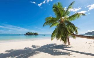 Destination Jamaïque