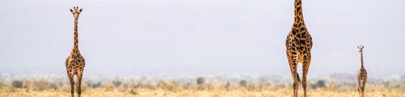Safari en Afrique avec Promoséjours