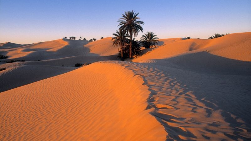 Circuit Mer et Désert et Yadis Djerba thalasso & spa 4*nl