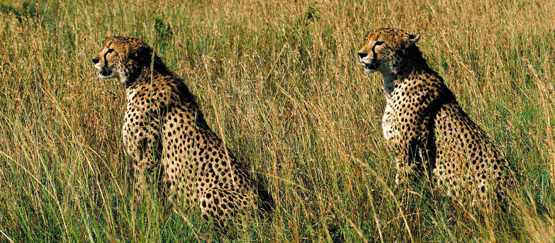 Afrique du Sud - Swaziland-Eswatini - Zimbabwe - Circuit Premiers Regards Afrique du Sud et extension Victoria Falls
