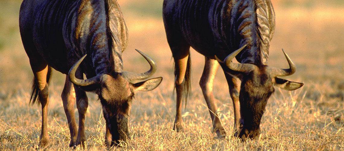 Afrique du Sud - Swaziland-Eswatini - Circuit Premiers Regards Afrique du Sud 3*