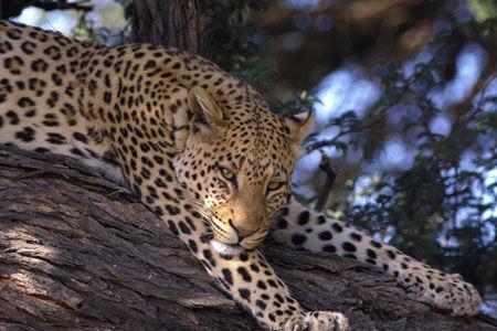 Afrique du Sud - Swaziland - Circuit Indispensable Afrique du Sud 3*
