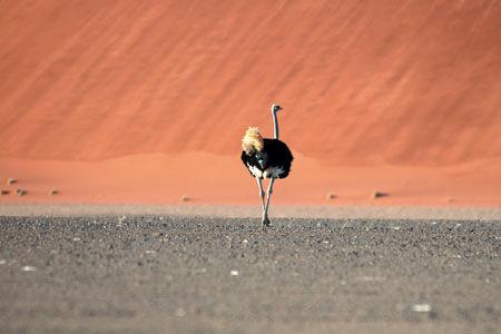 Circuit Lumières de Namibie 3/4*