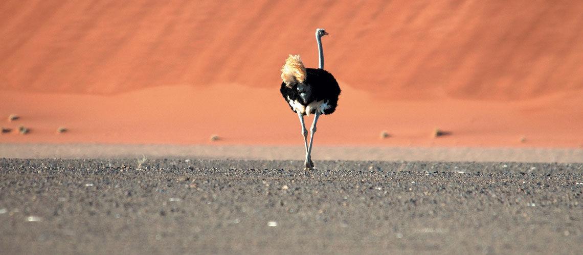 Namibie - Circuit Premiers Regards Namibie 3*