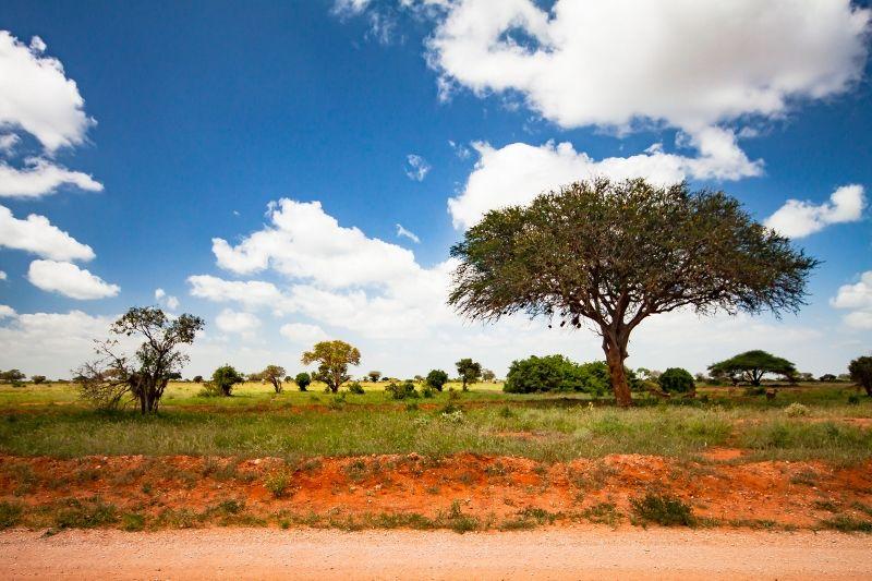 Safaris Tsavo East/ Taita Hills et Séjour au Neptune Village Beach Resort & Spa 4 *