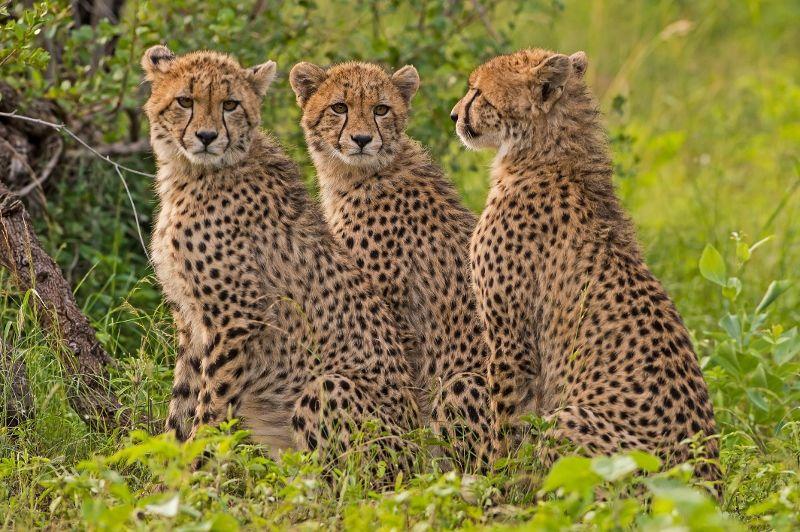 Safaris Ngorongoro, Tarangire et Manyara et Séjour au Waridi Beach Resort & Spa 4*nl
